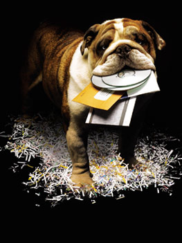 Bulldog_02.jpg