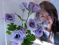 blue_rose2.jpg