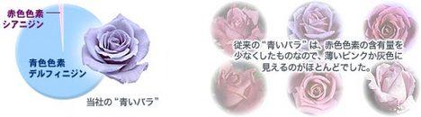 rose_glaf01.jpg