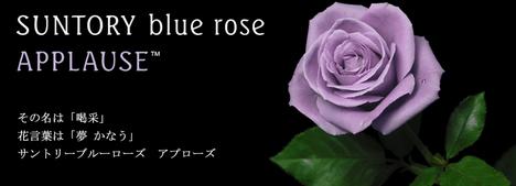 suntory_bluerose091103.jpg