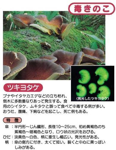 tukiyotake.jpg
